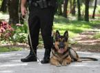 Wielka Brytania: Funkcjonariusz przejdzie na emeryturę z psem policyjnym? 23 tys. podpisów pod petycją