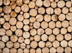 """Lasy Państwowe pod hasłem """"żyj w zgodzie z naturą"""" będą budować domy z drewna"""