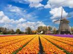 Nowa fala emigracji: Polacy szukają lepszego życia w Holandii