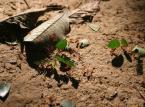 Zwrot VAT nie dla mrówek: Tax free a wyłudzanie podatku