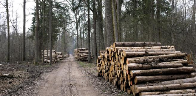 Minister środowiska poinformował, że do zespołu zostali także zaproszeni przedstawiciele organizacji ekologicznych, jednak do tej pory resort nie otrzymał od nich odpowiedzi.