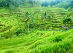14. miejsce: Ubud w Indonezji