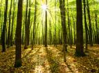 Lasy Państwowe z prawem pierwokupu gruntów leśnych