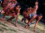 Podróż do kongijskiej puszczy na Brave Festival 2015