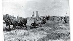 Żniwa w majątku hrabiego Remigiusza Grocholskiego, 1924 r.