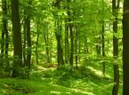 Działka budowlana z własnym lasem? Okazuje się, że wcale nie jest tak drogo